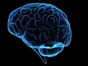 a6b7d-brain-1-1